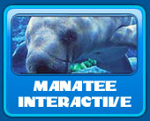 swim with the manatee
