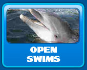 Open dolphin swimming