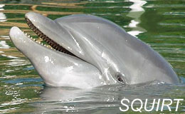 dolphin pictures 2